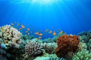 Our Seas